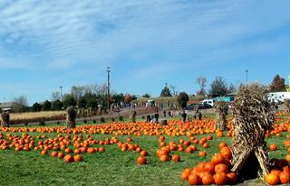PumpkinFarmField102004.jpg